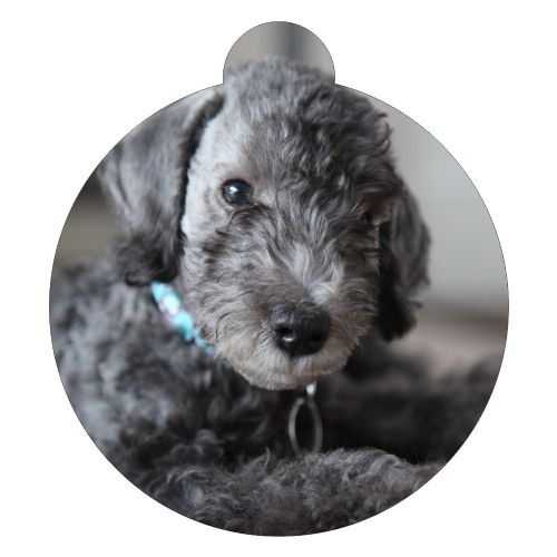 Bedlington Terrier Picture ID tag